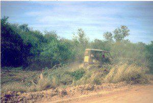 Waldrodung Bulldozer H61-2012